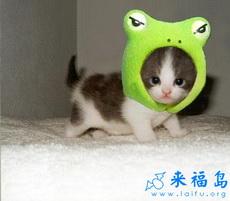 Gato como rana