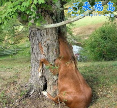 Horse gets head stuck in tree