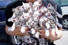 这个叫好大一簇猫