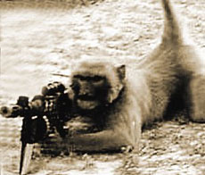 """俺是一名""""猴士兵""""了"""