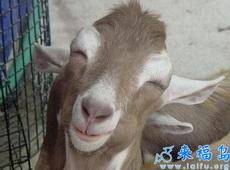 """""""喜羊羊""""的孪生兄弟——""""喜驴驴"""""""