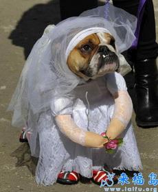 雖然我長得不漂亮,但還是可以當新娘的~