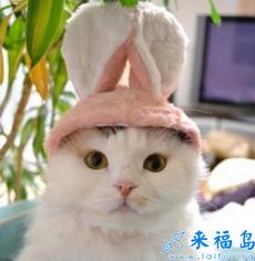 Gato conejo!!!