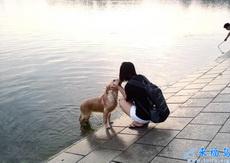 狗狗!在女生面前撒尿很不文明啊!!
