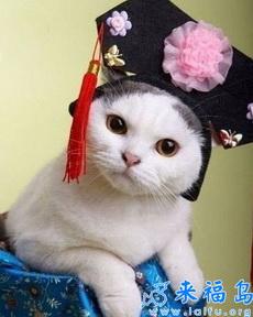 小猫也爱古装打扮