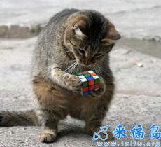 Rubik's Cube Cat