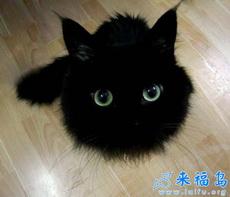 Qué mono es este gato!!