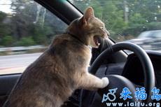 啊!!!刹车够不着……