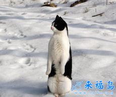 Me parezco un pingüino
