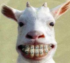 Se están poniendo bonitos mis dientes