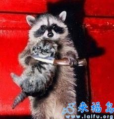 Kitten dies
