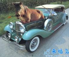 A One Horsepower Car.