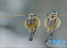 第一次见过鸟是这样子的