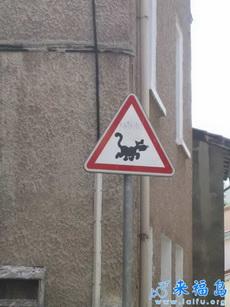 标志显示此处常有坏猫咪横行