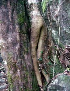 森林惊现光屁股MM