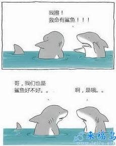 我擦,有鲨鱼