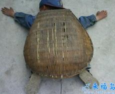 Soy una tortuga pequeña.