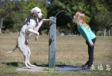 聪明的狗和可爱的小萝莉