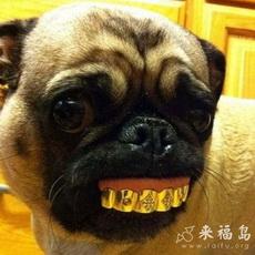 Rich Doggy