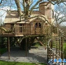 因树制宜的房子