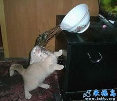 te lo merece, gato tigraso