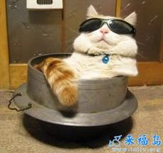 El gato sabe gozar la vida.
