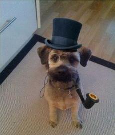 狗狗也像绅士了
