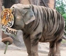 Roar, soy un tigre.