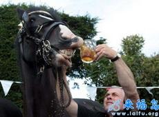 给马儿喝酒,露出来笑容