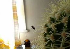 这苍蝇死得还悲壮啊