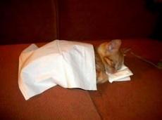这也能当猫咪的被子和枕头?