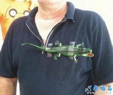 哥也买得起奢侈品牌鳄鱼了