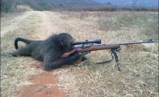这才是真正的生物武器 猴子狙击手