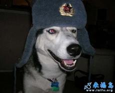 Policedog.