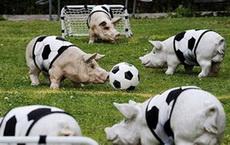 另一个平行空间里的某国足球队
