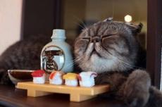 醉酒后的貓咪
