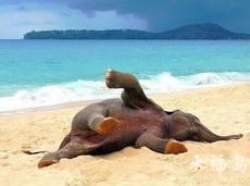 最近热带地区的天气,大象都赖着不走