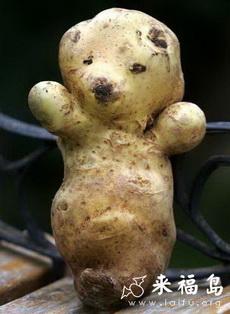 快乐土豆熊