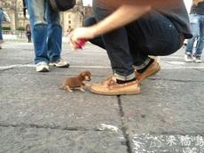 超小的迷你狗