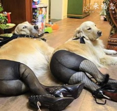 Sexy dogs
