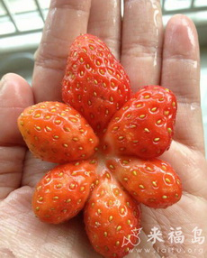 买草莓买到个奇葩,这家伙都经历了什么?