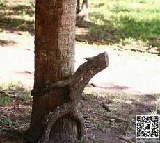 Who Says Nature Isn't Funny?