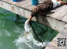 终于钓到一条鱼了
