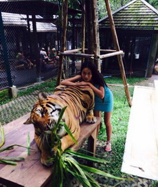 现在老虎都开始吃草了?