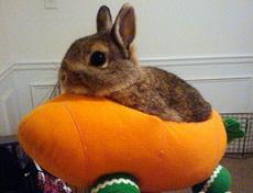 坐着我的胡萝卜飞船私奔到月球