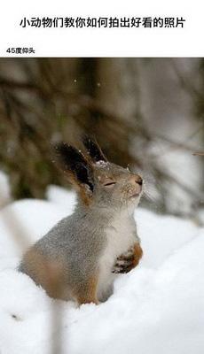 让萌萌的小动物们来教你如何拍照吧!