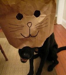 主人,你这是在侮辱我的狗格你知道吗!