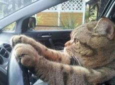 唉,每天都堵車好煩啊!