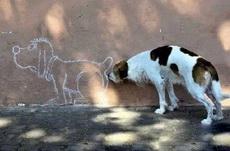 狗狗的节操呢