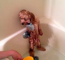 说说吧,刚才谁在浴池嘘嘘的!